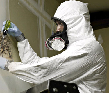 A mold inspector checking mold growth on drywall.