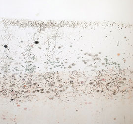 A patch of mold growth on a wall.